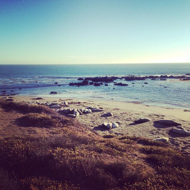 Smelly Elephant Seals