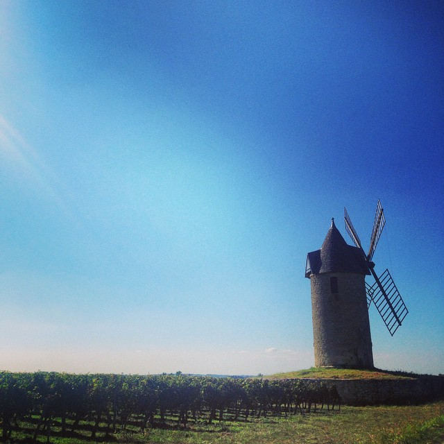 Windmill in the vineyards