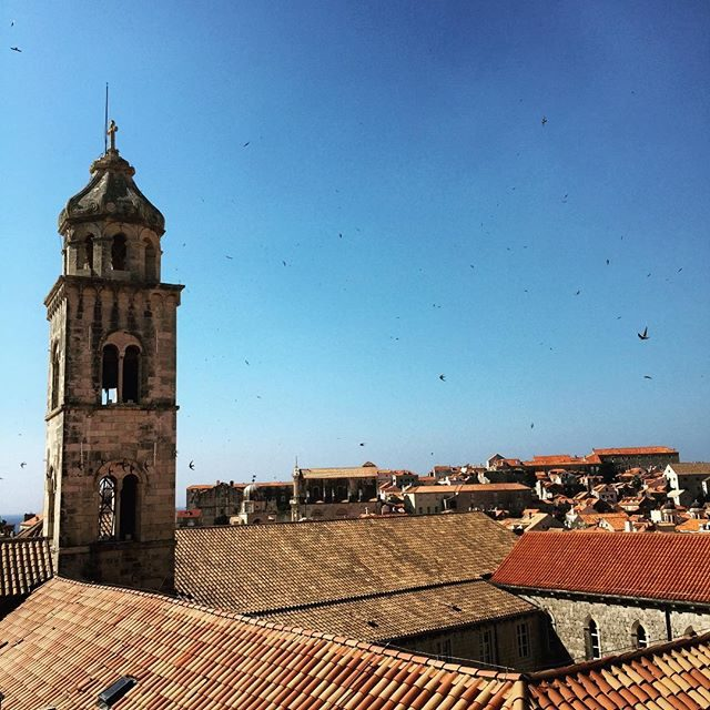 Bell tower, birds & rooftops