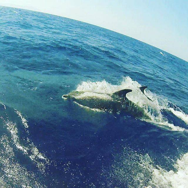 Dolphin spotting!